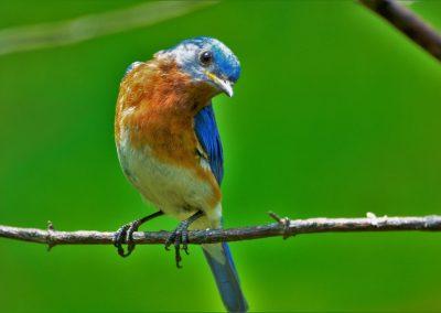 bird-4419007_1920